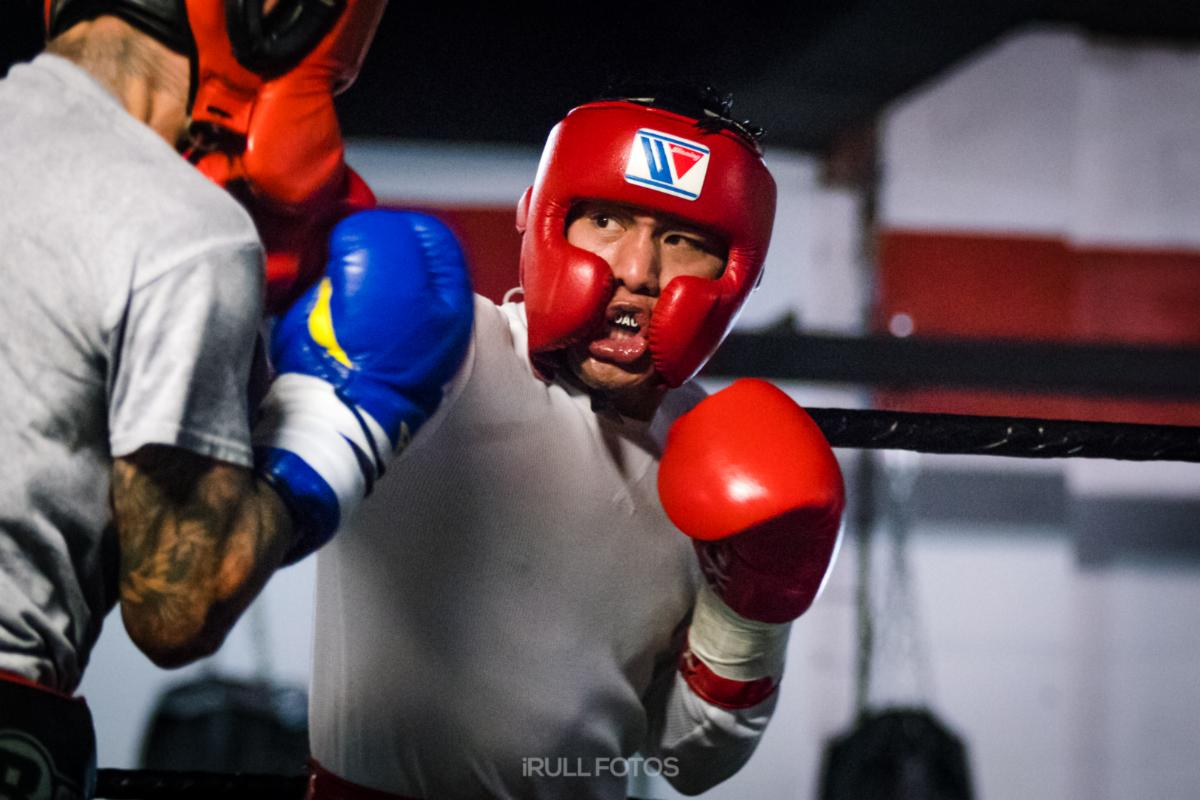 Alexis Texas Boxing boxing insider notebook: flores, haney, usa boxing, and more